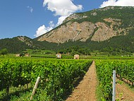 Vignoble de Chatillon en Diois