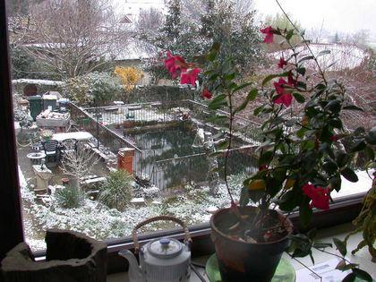 Hiver bassin en hiver au jardin de la source for Hiver au jardin