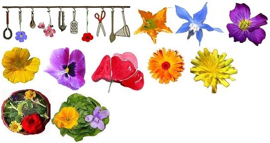 cuisine aux fleurs,recettes aux fleurs,plantes aromatiques,herbes,au ...