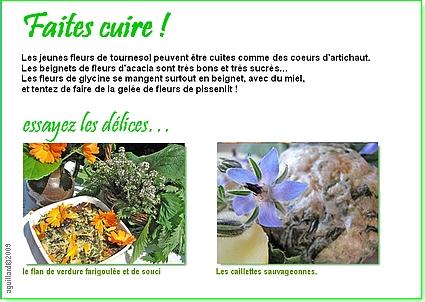 Au coeur des plantes cuisine de flore du jardin de la source for Au coeur de la cuisine